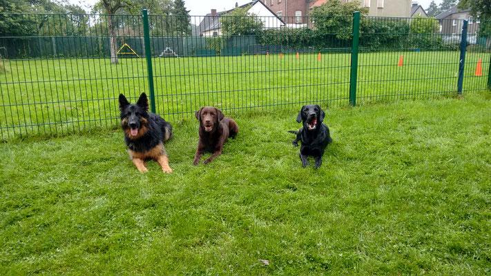 Freida, Toni und Finch