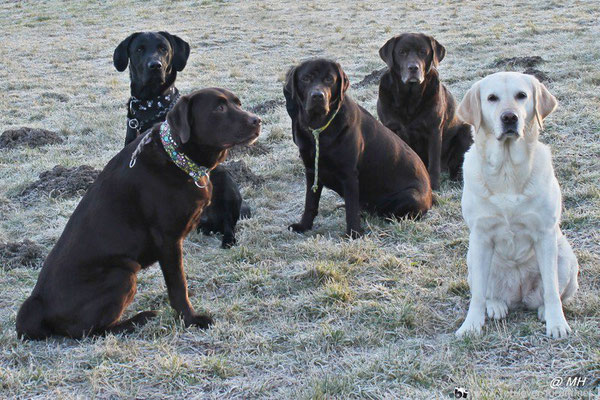 Labradors vom Frohlinder Berg und Finch (Foto: M. Hahnefeld)