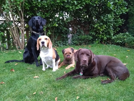 Finch, Hunter, Dexter und Toni