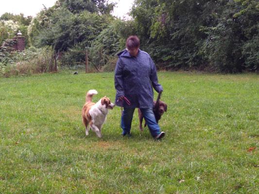 Leinenführung mit zwei Hunden