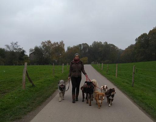 """Zu Gast bei der Meute """"Grüne Hunde"""" von Katharina Will"""