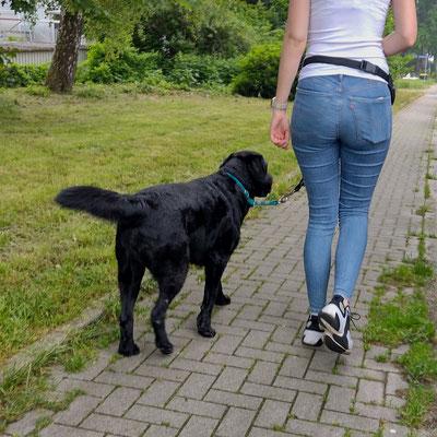 Einezeltraining Labrador
