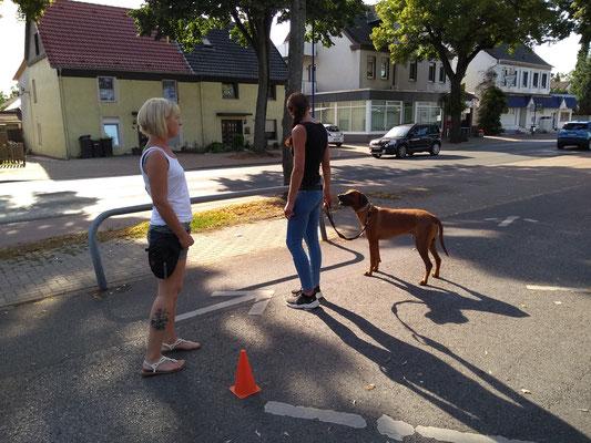 """Kurs """"Begegnungstraining, Rückruf und Gehorsam"""" im Juli/August"""