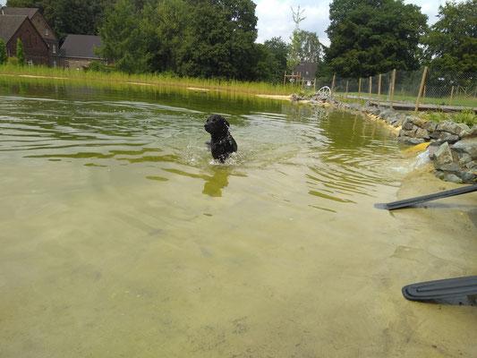 Welpenschwimmen