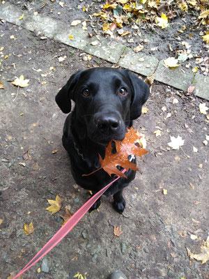 Herbst mit Finch