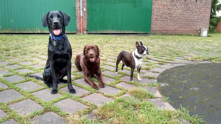 Finch, Toni und Roxy