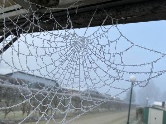Ein zugefrorenes Spinnennetz das an eine gehäkelte Decke erinnert