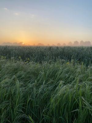 Grünes Gras im Vordergrund, ein zarter Sonnenuntergang im Hintergrund - fertig ist ein stimmungsvolles Bild.