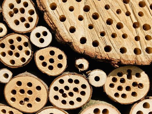 Auch Holzbohrungen sind für Wildbienen gut geeignet.