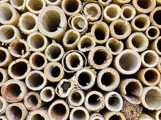 Pflanzenröhrchen nutzen Wildbienen zum Nisten und sie legen dort ihre Eier ab.