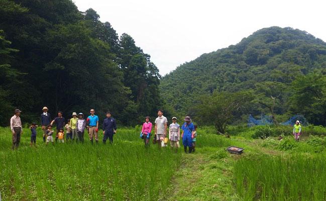7月28日 上山口寺前谷戸復元プロジェクト