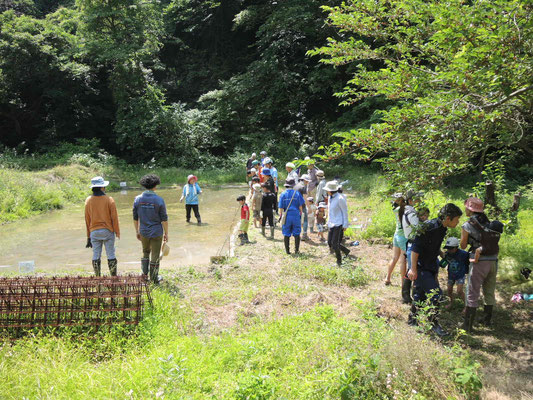 5月26日 上山口寺前谷戸復元プロジェクト