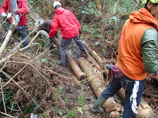 一斉巡視での倒木処理協力