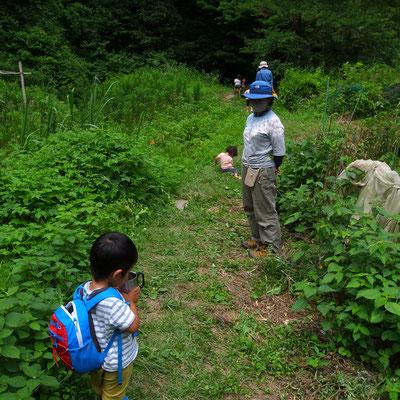 6月25日、大沢谷広場プロジェクト(青空共同保育つくしとたね)