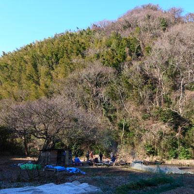 オオシマザクラの木の下に物置がありました。