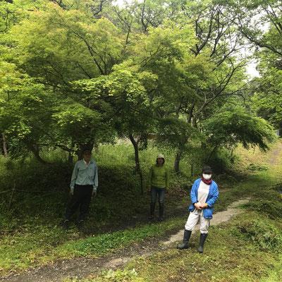5月7日、イノシシ被害対策プロジェクト+大沢谷広場プロジェクト