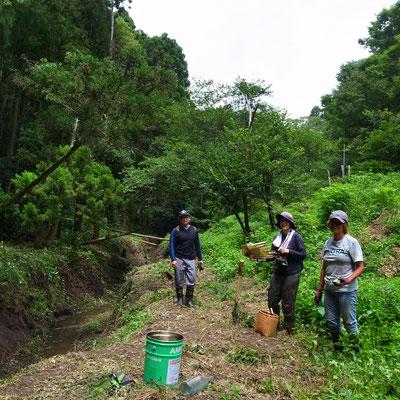 8月12日、イノシシ被害対策プロジェクト+大沢谷広場プロジェクト