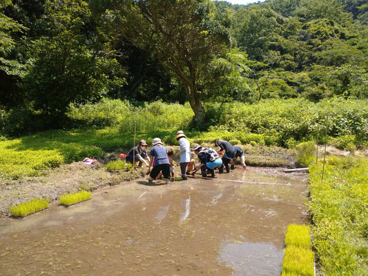 6月10日、上山口寺前谷戸復元プロジェクト(青空共同保育「つくしとたね」)