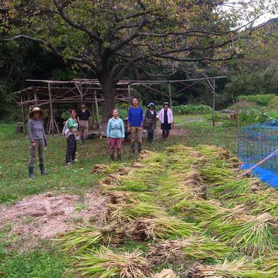 10月10日 上山口寺前谷戸復元プロジェクト