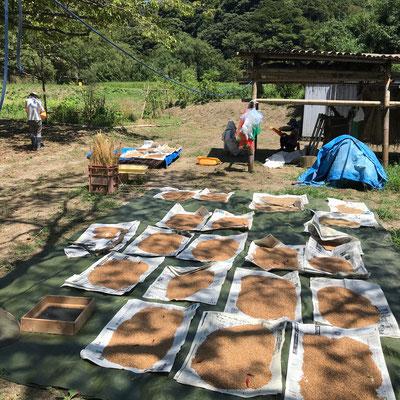 8月26日、農園管理プロジェクト