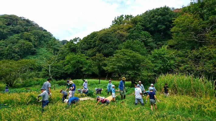 9月22日 上山口寺前谷戸復元プロジェクト