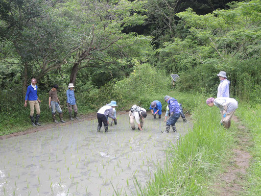 6月23日 上山口寺前谷戸復元プロジェクト