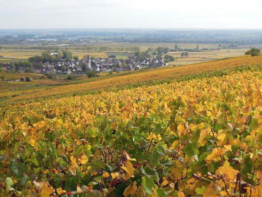 Blick über die Weinfelder bei Pommard . Foto: C. Schumann, 2019