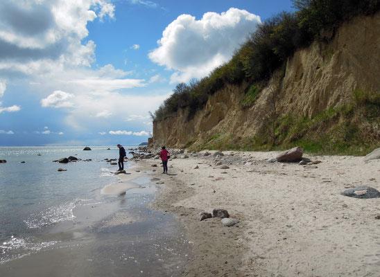 Die Steilküste von Göhren ist ein beeindruckendes Naturschauspiel. Foto: C. Schumann, 2016