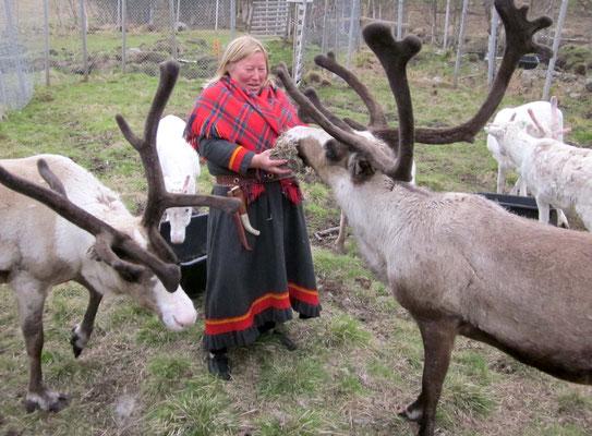 Auch auf den Lofoten leben Sami, die nordischen Ureinwohner