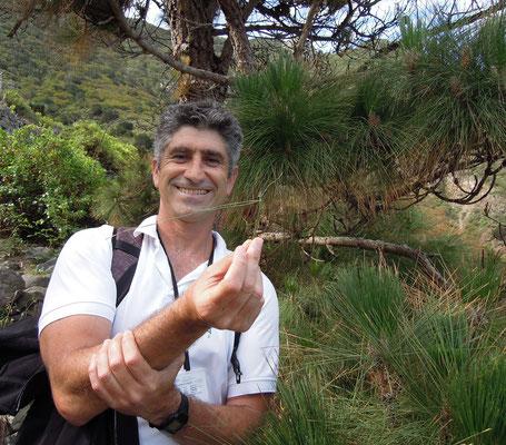 Unser Guide Cao Sánchez-Serrano zeigt eine einheimische Kiefer