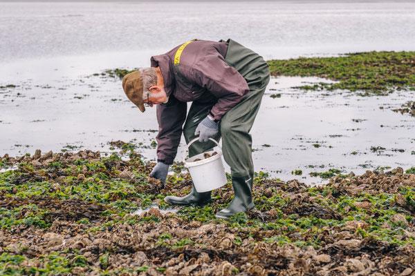 Austernsafari im dänischen Wattenmeer. Foto: PR/Thomas Høyrup Christensen