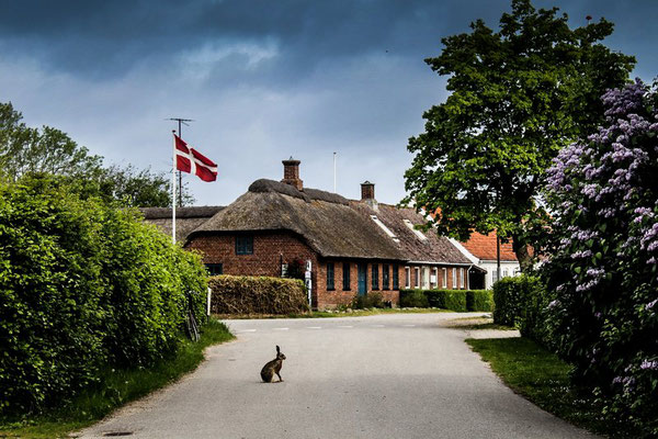 Endelave hat nur etwas mehr als 150 Bewohner – plus Wildtiere wie Kaninchen.  Foto: PR/Destination Kystlandet/Melissa Villumsen