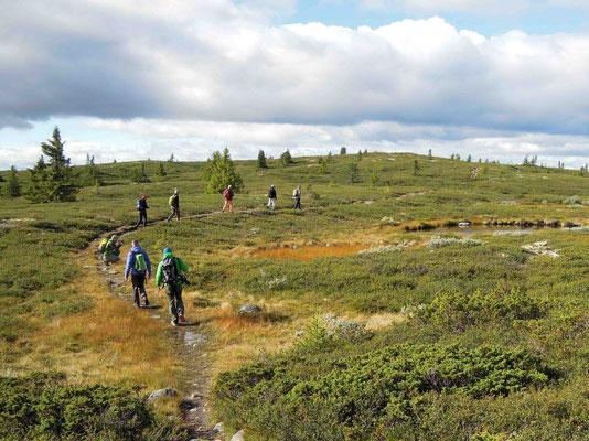 Wanderung auf dem Golsfjellet