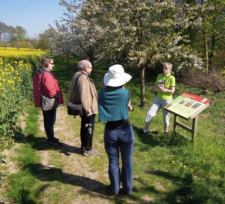 Besuchergruppe auf dem Kirschlehrpfad. Foto: C. Schumann, 2019
