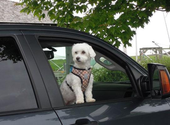 Ohne Hund geht nichts - und die Vierbeiner schnuppern gern frischen Fahrtwind