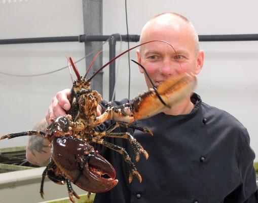 Einer der bekannten Muschel- und Hummerexporteur am Limfjord ist Glyngöre Shellfish