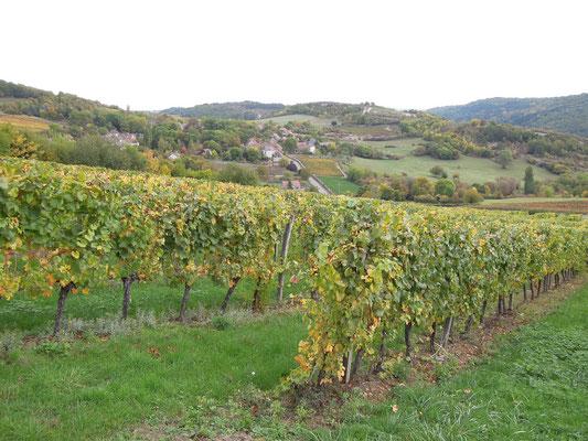 Weinfeld in der Nähe von Orches im Burgund. Foto: C. Schumann, 2019