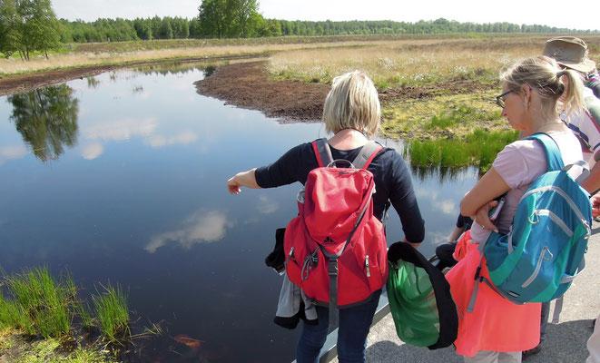 Silke Hirndorf führt eine Gruppe Naturfreunde durchs Bargerveen. Foto: C. Schumann