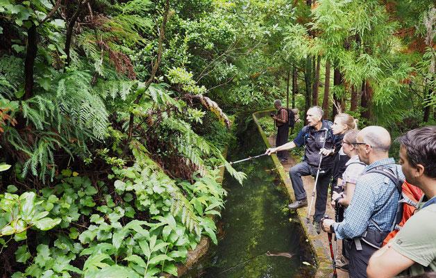 Historische Bewässerung, Levada, am Wanderweg zum Kratersee Lagoa do Fogo. Foto: C. Schumann