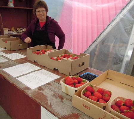 Frisches Obst und Gemüse kauft man am besten direkt auf dem Farmers' Market wie hier in Neufundland