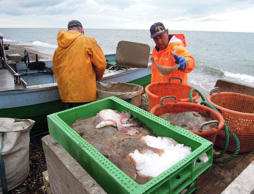 Wie früher liegen die Fischerboote in Stenbjerg Strand noch am Ufer - sortiert wird der Fisch gleich vor Ort
