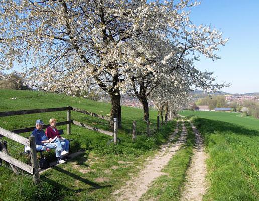 Wandern auf einem TERRA.track rund um Hagen am Teutoburger Wald. Foto: C. Schumann, 2019
