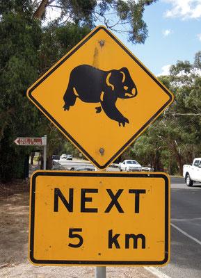 Vorsicht, Koalas! Foto: C. Schumann