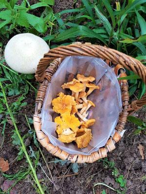 Pilze sammeln Urlaub Kagar