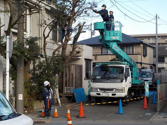 支障木の伐採工事