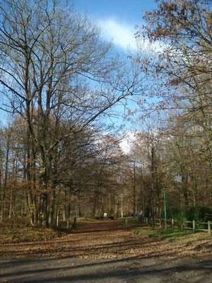 Le Parc de Baillet