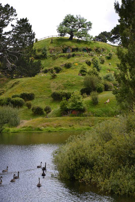 Neuseeland, Auenland