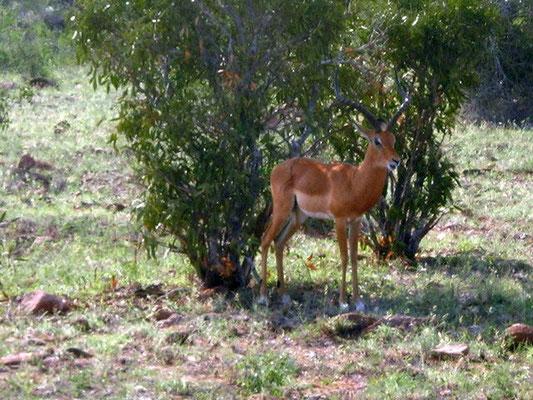 tsavo-est-safari
