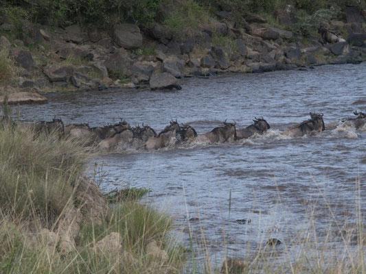 la grande migrazione masai mara - in2kenya