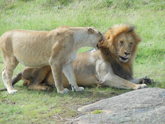 in2kenya, leoni